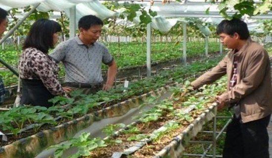 臭氧水取代農藥 1