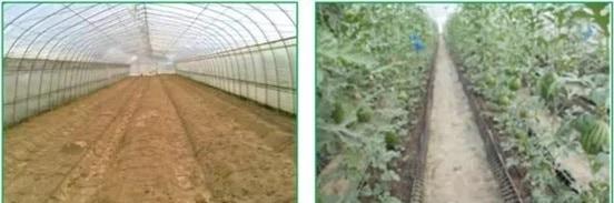 都市農業科技園——土壤與基質消毒